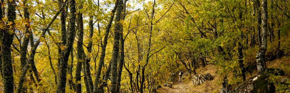 Ruta por los Bosques del Ambroz