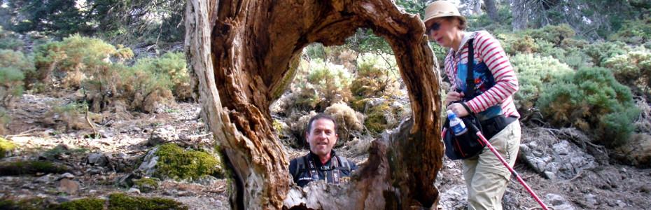 Sierra de las Nieves (Ronda)